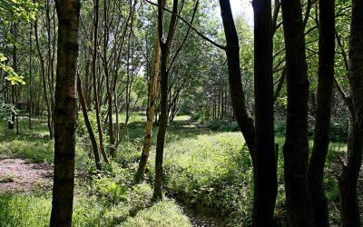 Woodland management on the Frimley Fuel estate